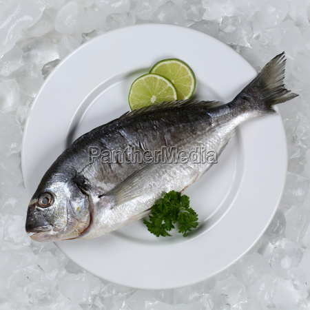 fresh fish on plate from above