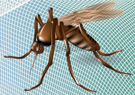 moskitonetz und moskito