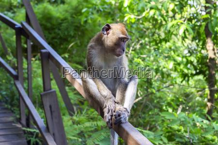 junge makaken