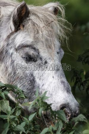 pony portait