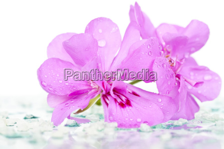 spa stones and pink flower