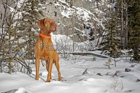 hund der draussen in der winterlandschaft