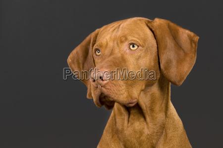 hundeportrait auf dunklem hintergrund