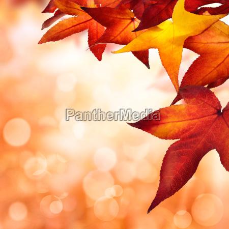 autumn background square