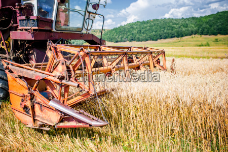 agricultural activities with vintage harvesting machine