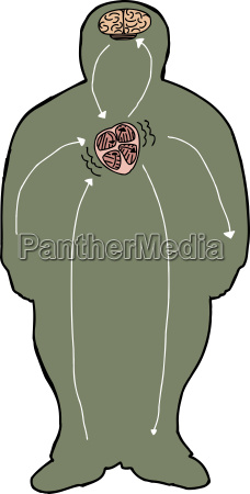 stroke diagramm