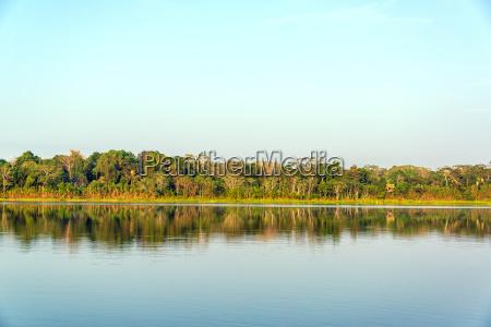 lake and jungle reflection