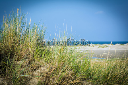dune at the north sea beach