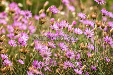 beautiful wild flowers closeup in the