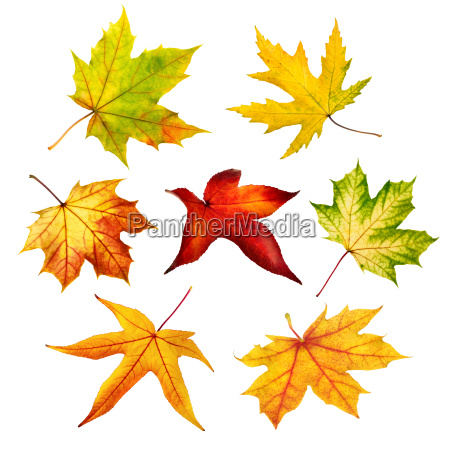 colorful autumn leaves in indemnified set