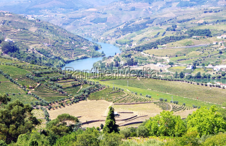 weinberge in douro valley portugal