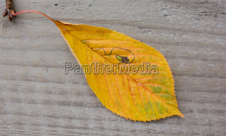 yellow leaf natural nature line drawing