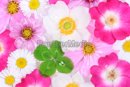 background with flowers and four leaf