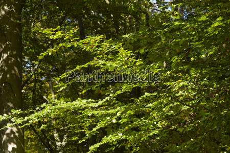 broadleaf forest light flooded leaves
