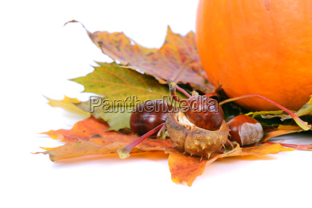 blatt baumblatt ahorn kastanien kuerbis marone