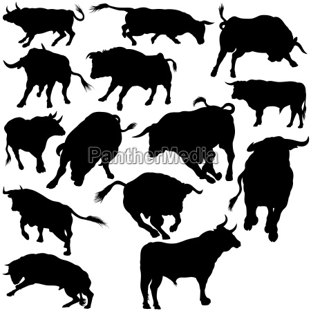 bull silhouettes collection black illustration