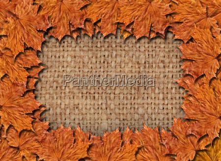 blatt baumblatt blaetter vorlage einzelbild einrahmen