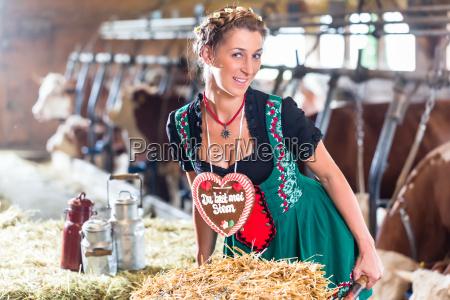 bavaria woman driving wheelbarrow in cowshed