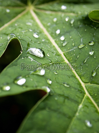 water drops on a green leave