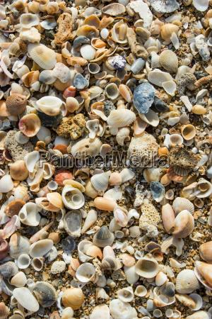 shell summer beach sand sea coast