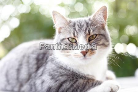 katzenportraet mit gegenlicht