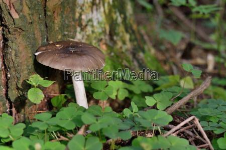 dachpilz beside a tree
