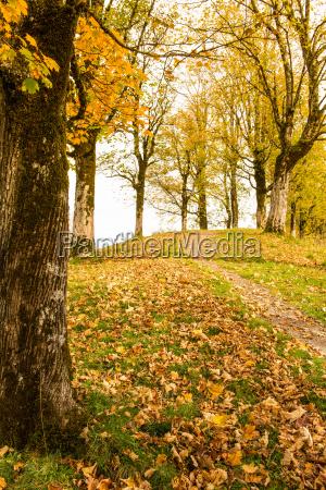 albero alberi foglie colori autunnali algovia