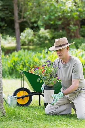 mature man engaged in gardening