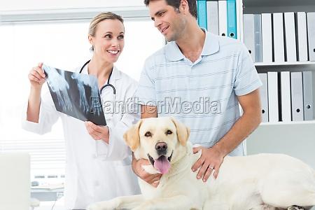 tierarzt und tierhalter roentgenstrahl des hundes