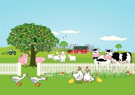 animals on farm