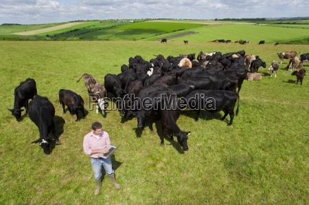 landwirt mit laptop unter den rinderherde
