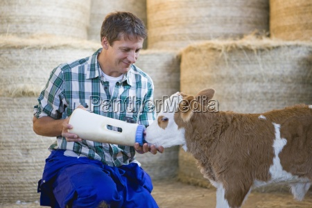 farmer hand rearing orphaned calf