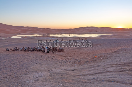 bedouin camp in sahara desert in
