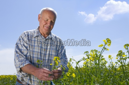 farmer examining rape seed plants