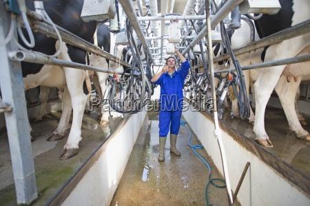 farmer kuehe melken in parlour