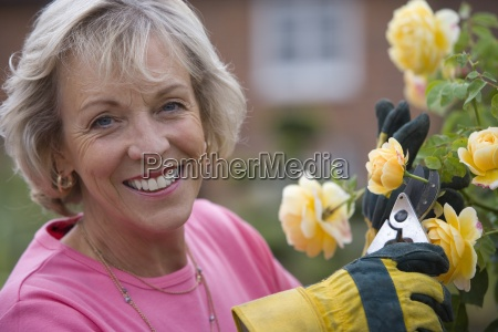 senior woman tending rose bush smiling