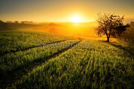 rural idyll in golden light