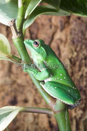 gruener frosch mit flecken