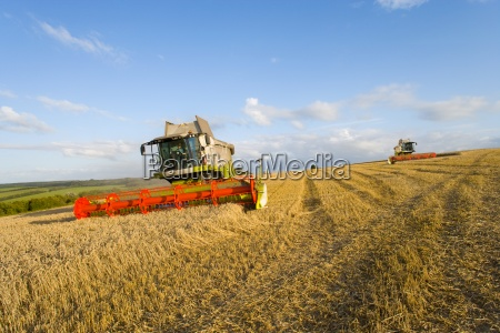 combina raccolta del grano nel campo