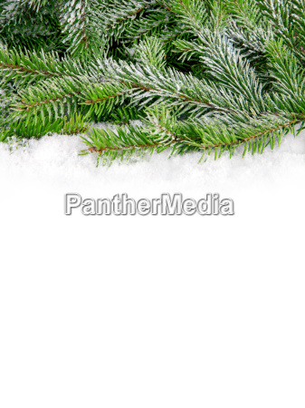 winter branch snow backdrop background christmas