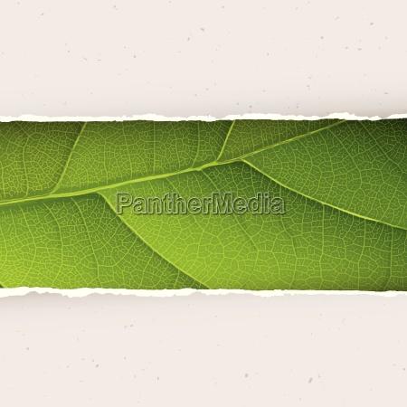 green leaf texture under torn paper