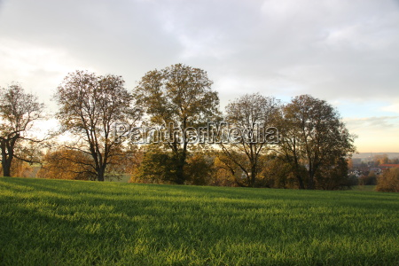 autumnal country