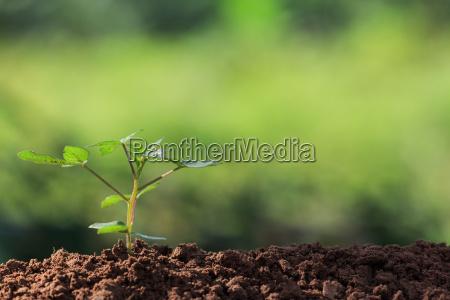 wurzeln der jungen pflanze und sonnenlicht