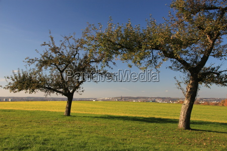apple trees close to town