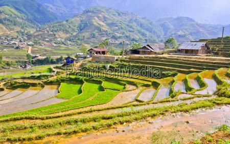 vietnamesische reisterrassenfelder in sapa vietnam