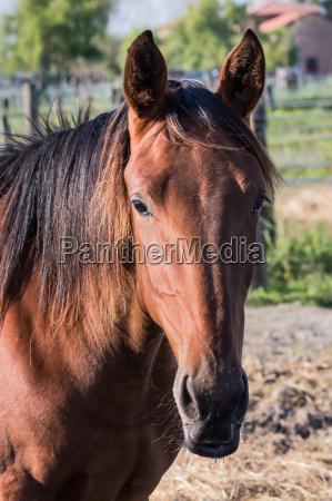 portraet des pferdes