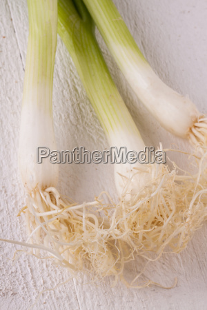 bunch of fresh spring onions spring
