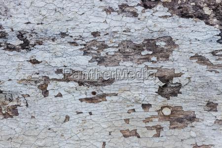 close up grain old wood