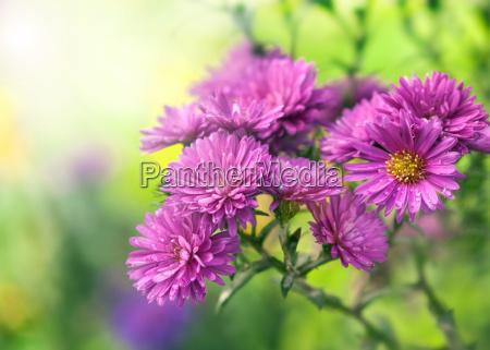lila blumen im sonnenlicht