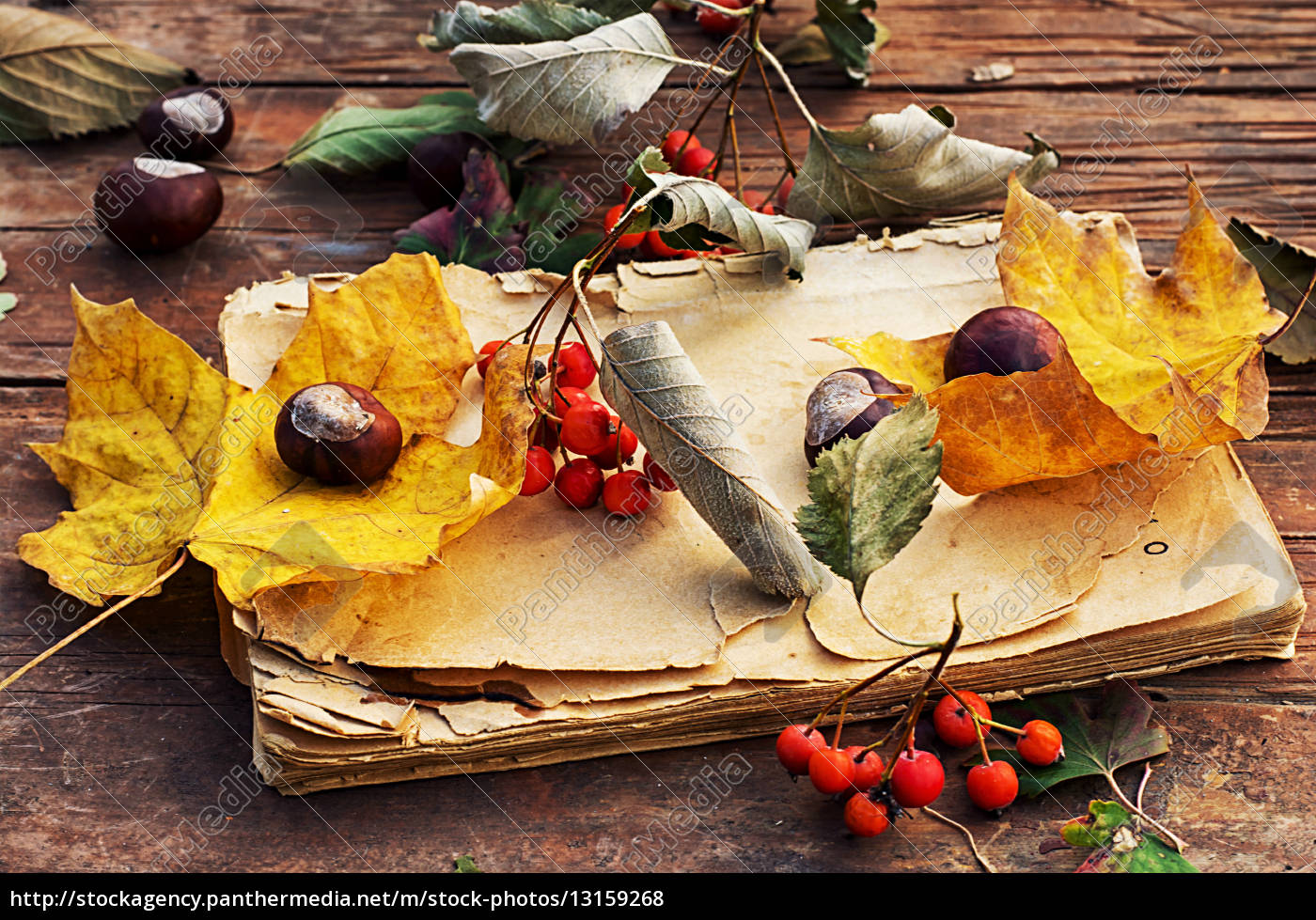 natur herbst blatt obst frucht jahreszeit ernte apfel